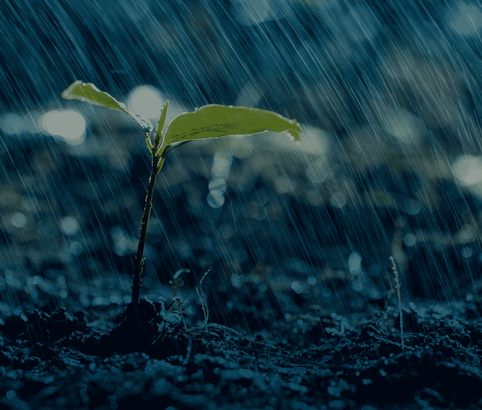 Chuva no lugar certo
